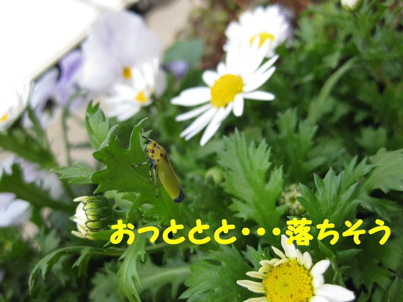 Img_1627